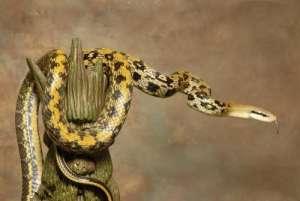 养宠物蛇必备知识:关于蛇的八大误区